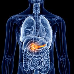 Endocrine System & Sugar Metabolism